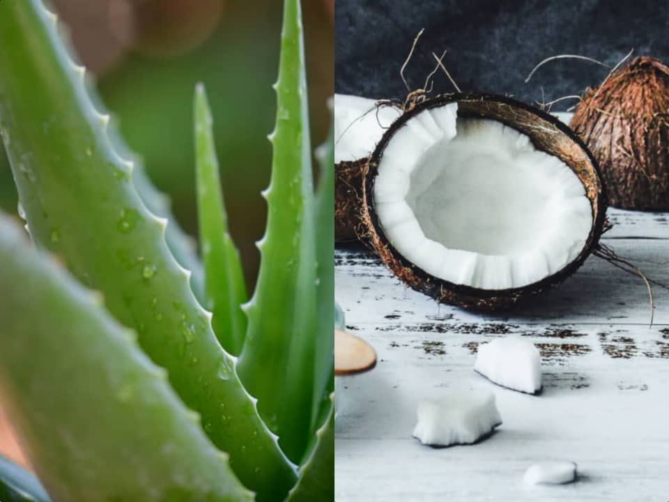 benefits of aloe vera and coconut oil for hair velacurls